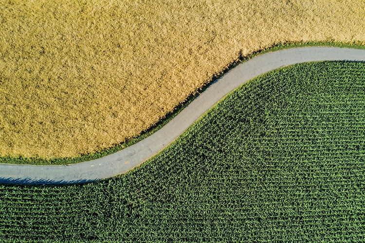 Aerial view of road through fields
